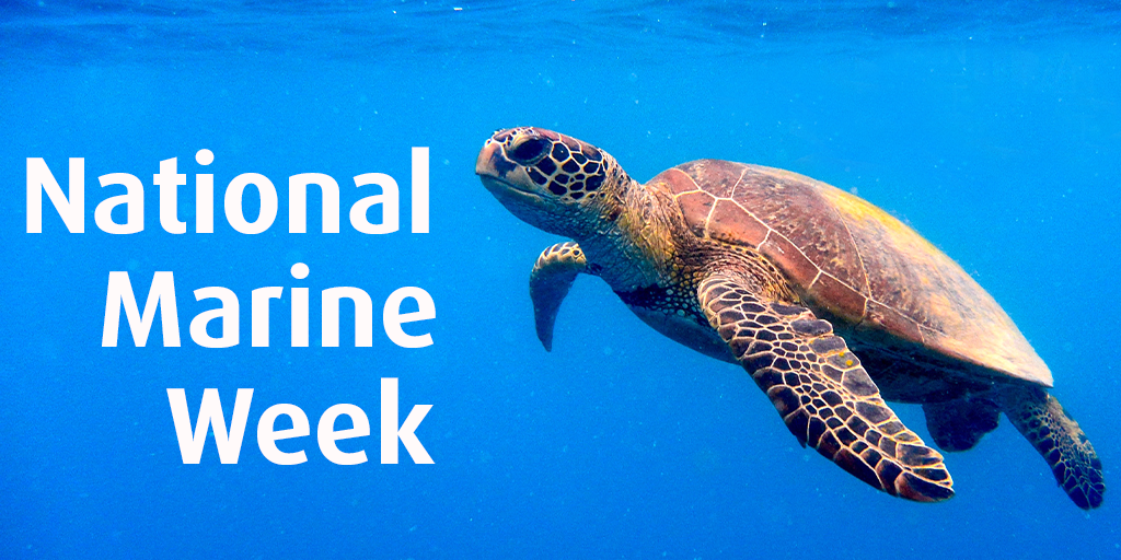 National Marine Week Turtle